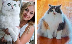 35 Gatos que no entienden lo GRANDES que son