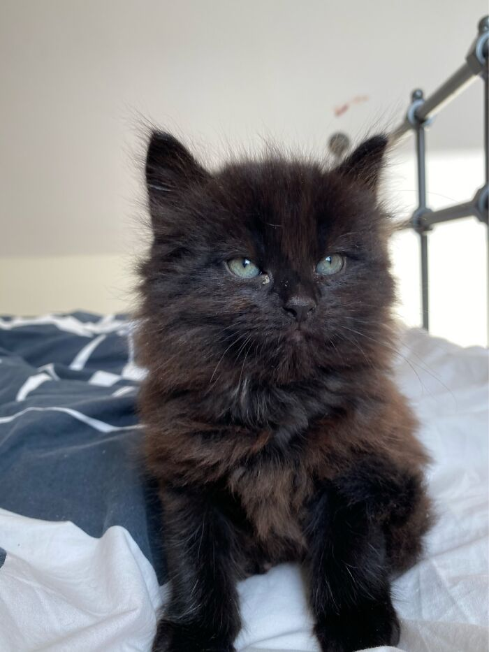 Day One Of Fluffball