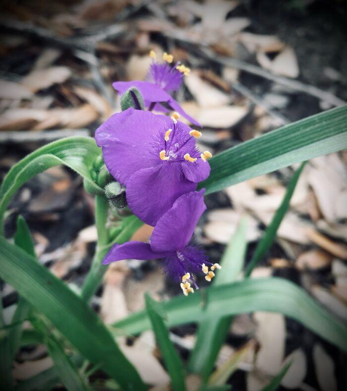 Just A Purple Flower