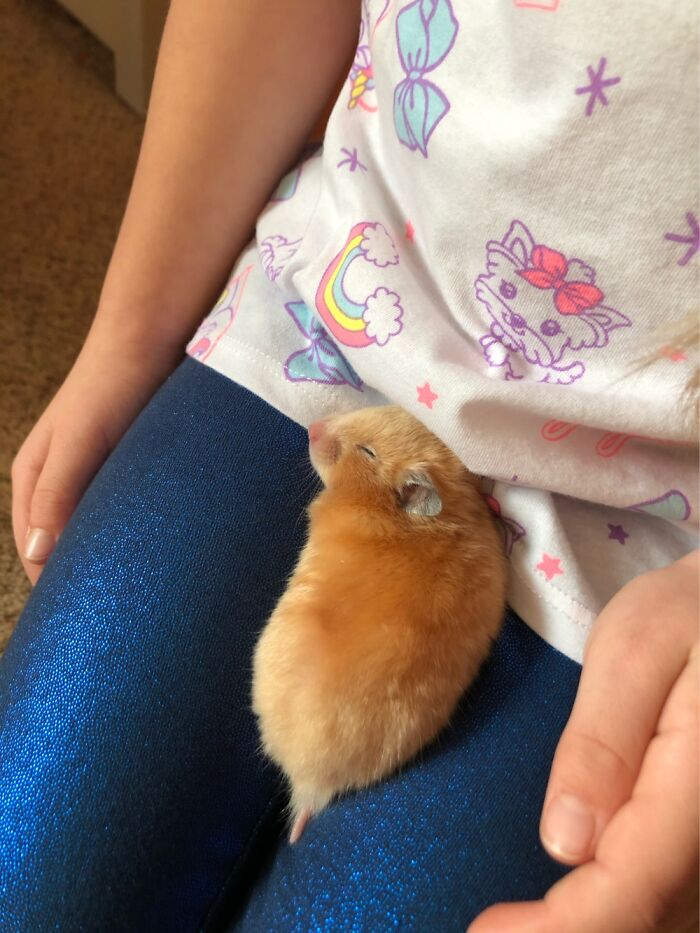 My Daughters Hamster. She Named Her Sweetie Pie