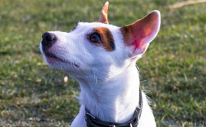 Este adolescente fue obligado a elegir entre su querido perro Dax y su familia, y eligió al perro