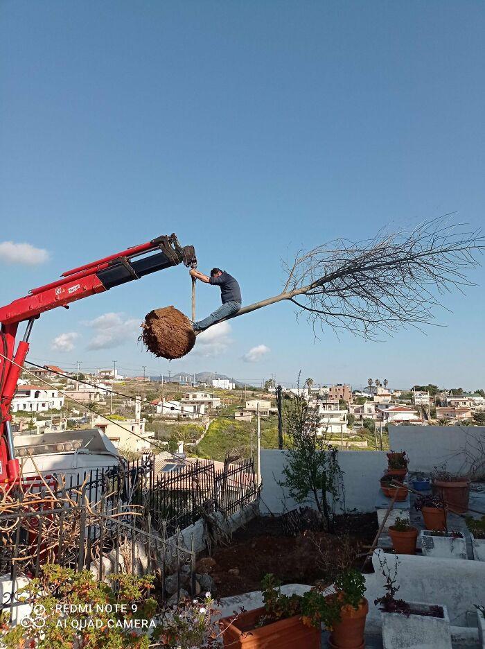 Planting Trees...
