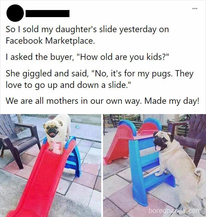Pug Slide (Found On Facebook)