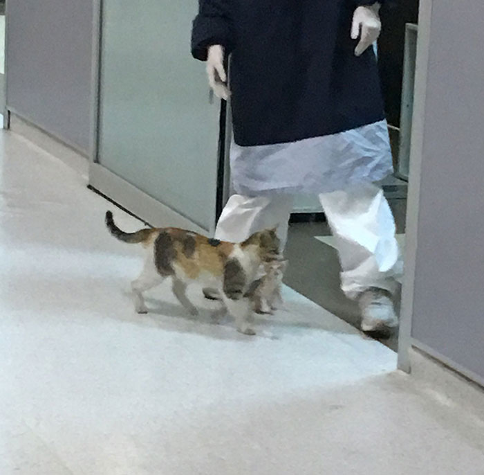 Viral Video Shows A Cat Walking Into A Hospital With Her Newborn Kitten To Get Medics To Help It