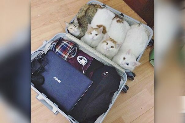 suitcase_catloaves-606660347e3b9.jpg