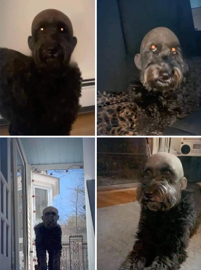 This Dog With Bald Filter