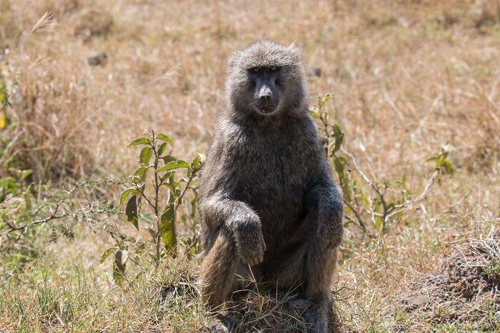 Zookeepers-Share-Dark-Zoo-Secrets