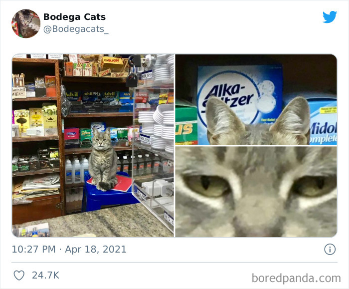 40 Cute Photos Of Bodega Cats That Feel Like Masters Of The Shops (New Pics)