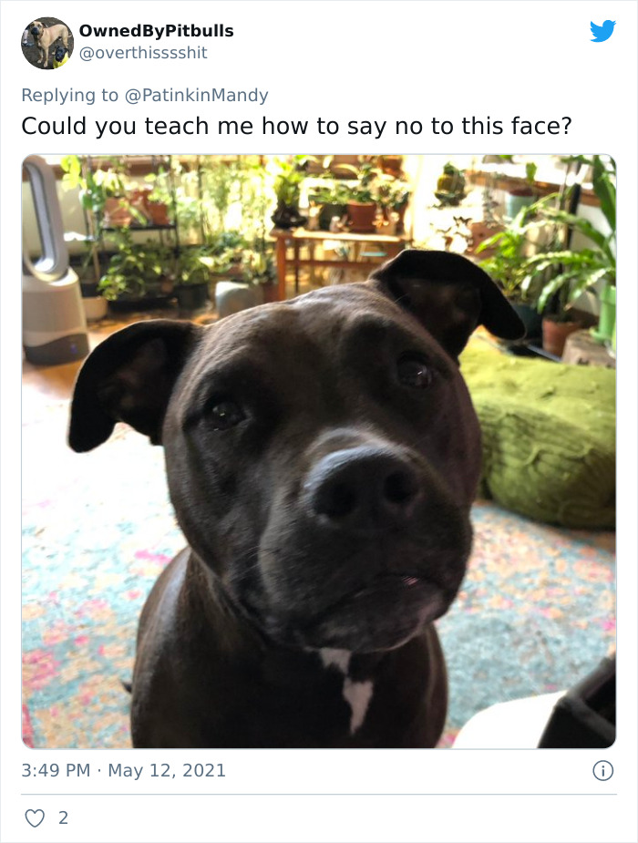 Puppy-Eyes-Begging-For-Food