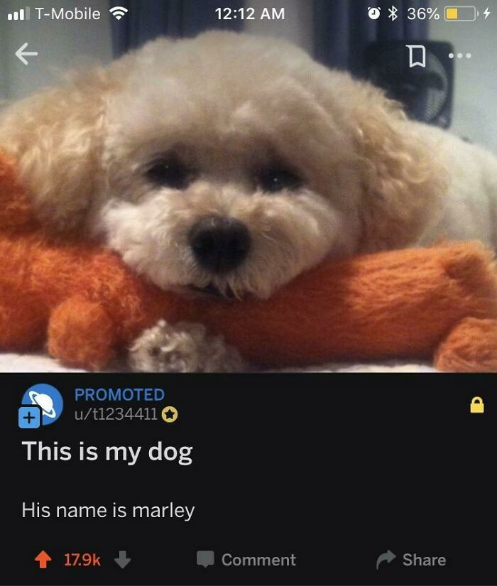 Somebody Paid To Promote Their Dog