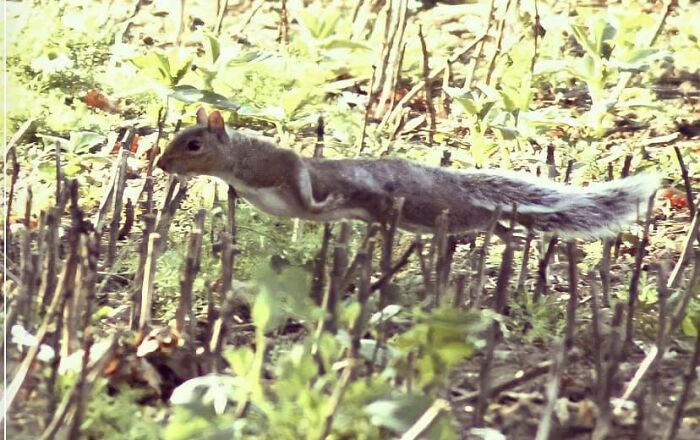 Perfect Exposure? Great Focus? Worthy Of National Geographic? Crap Photo Of A Squirrel