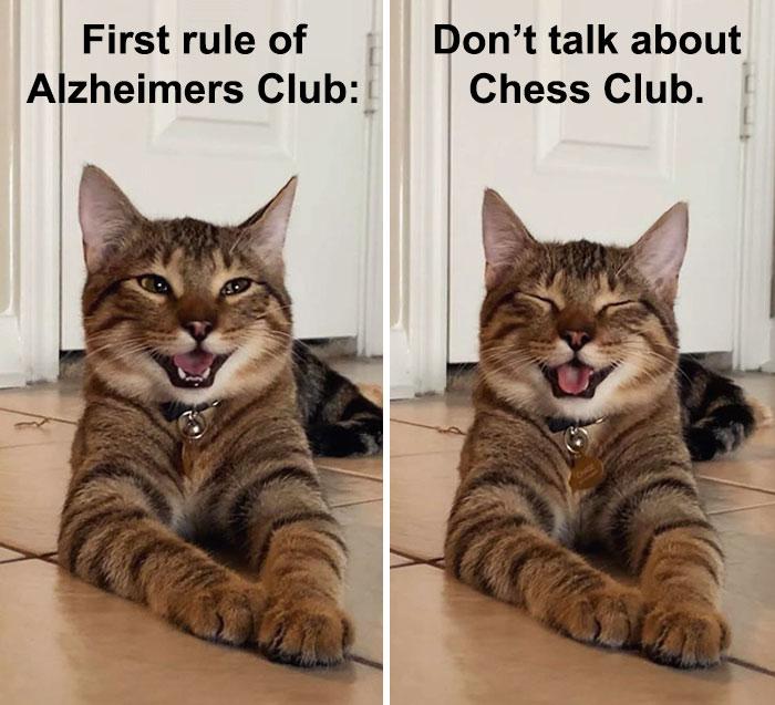 Cat Dad Jokes