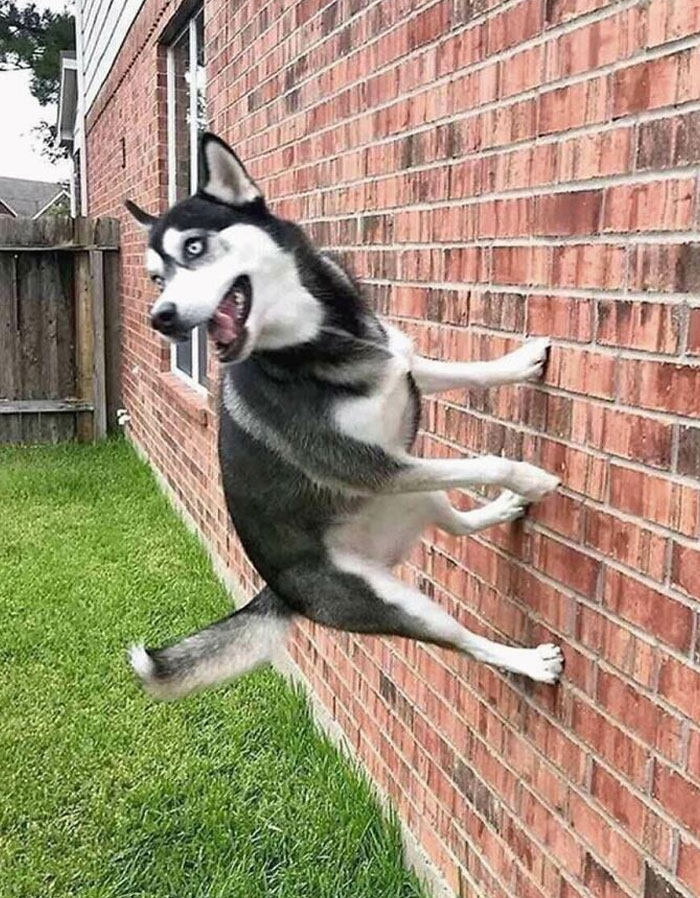 """""""Honey, The Dog's Walking On The Wall Again"""""""