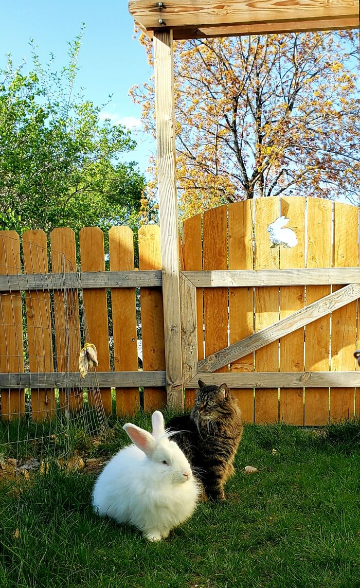 Benny & Rex, Yard Kings. They Aren't Bffs, But Will Give Each Other Nose Boops Of Respect.