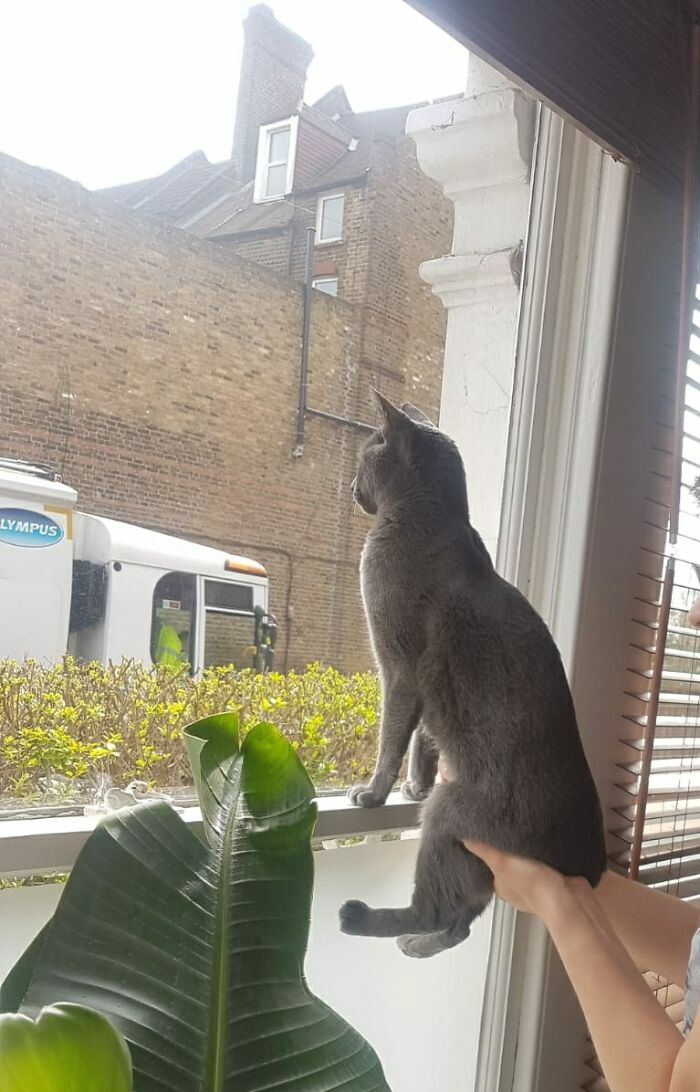 She Likes To Watch The Bin Men, But Can't See Out By Herself