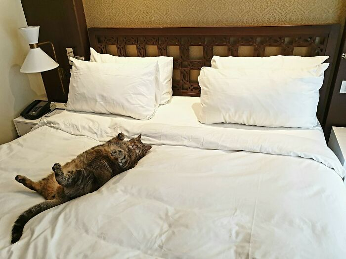 Brought My Senior Cat On Vacation With Me. This Is How The Maids Left Her After They Finished Cleaning My Hotel Room