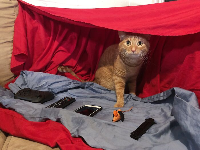 Our Cat Is Obsessed With Blanket Forts, So We Made Him This. He Has Wares, If You Have Coin