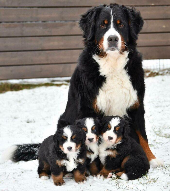 La foto familiar perfecta