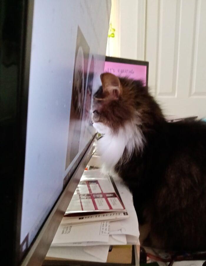 """""""¡Acabarás dañándote la vista si te sientas tan cerca de la pantalla!"""", le dije"""