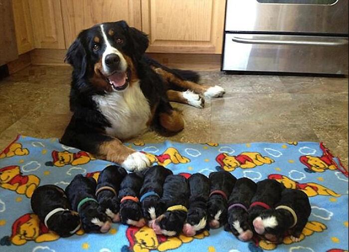 Una madre muy contenta con su cachorros