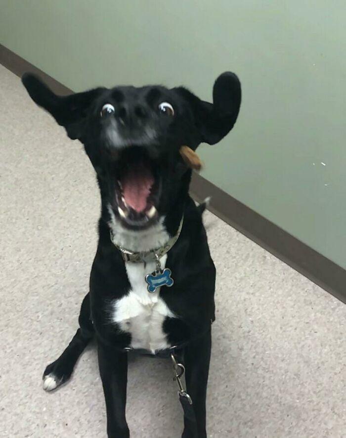 Mi veterinario me envió esto de la revisión de mis perros hoy