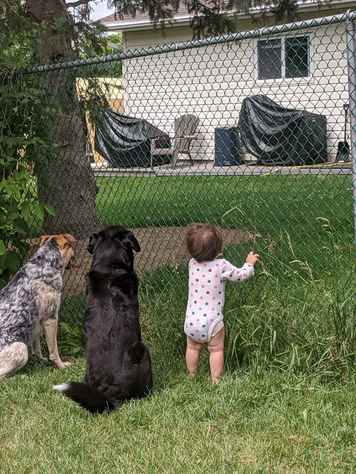 Our Neighbor Gives Treats Through The Fence. Recently He Has Been Giving My Daughter Treats Too. This Is Them Waiting Patiently Today
