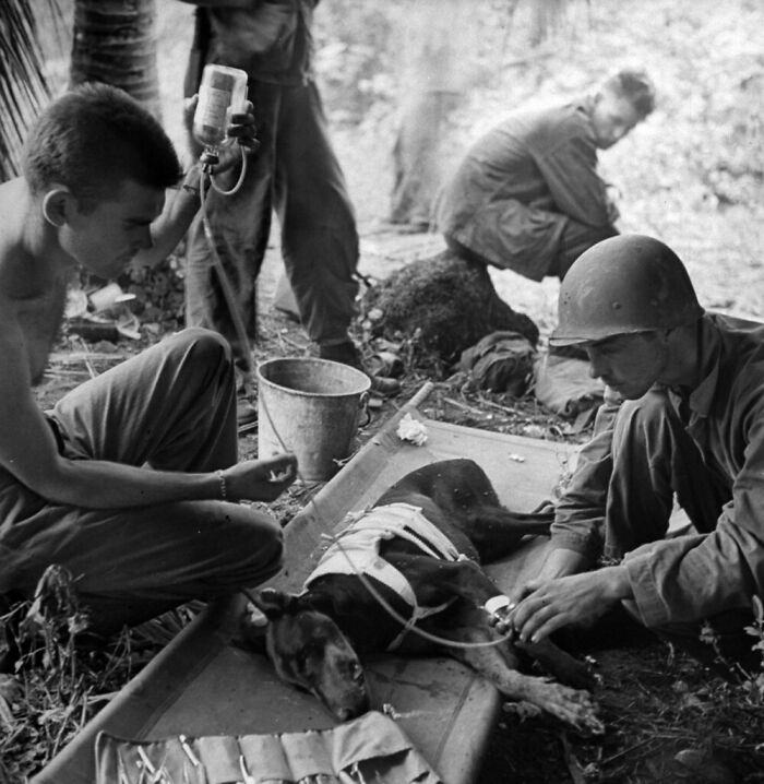 American Troops Treat A Wounded Dog On Orote Pennisula. W.Eugene Smith. 1944