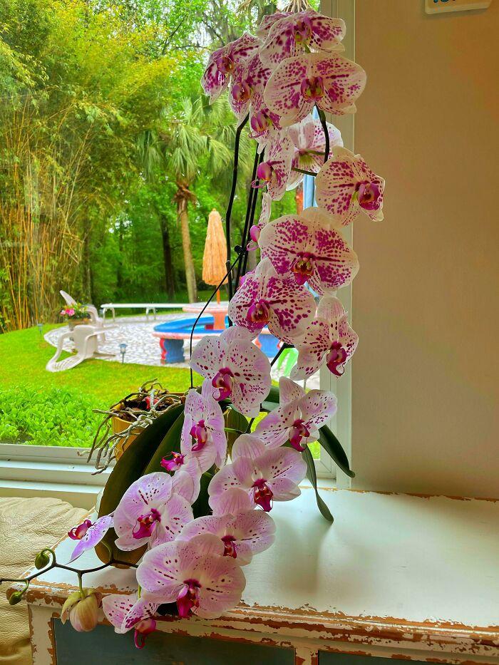 Alguien tiró estas orquídeas a la basura