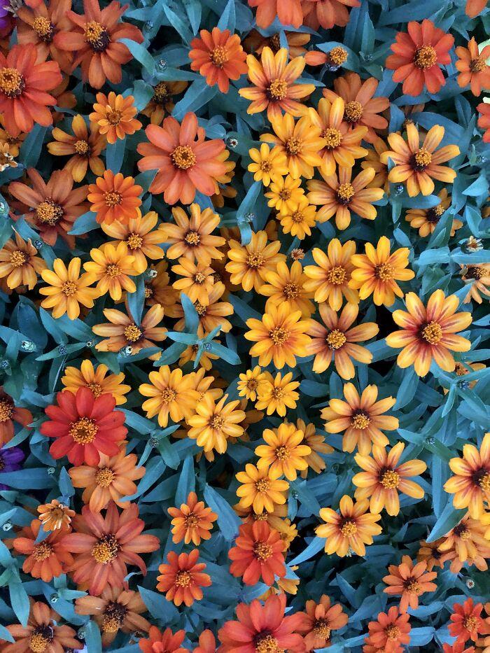 Flores al atardecer