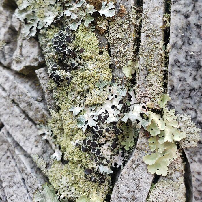 Las texturas de los líquenes
