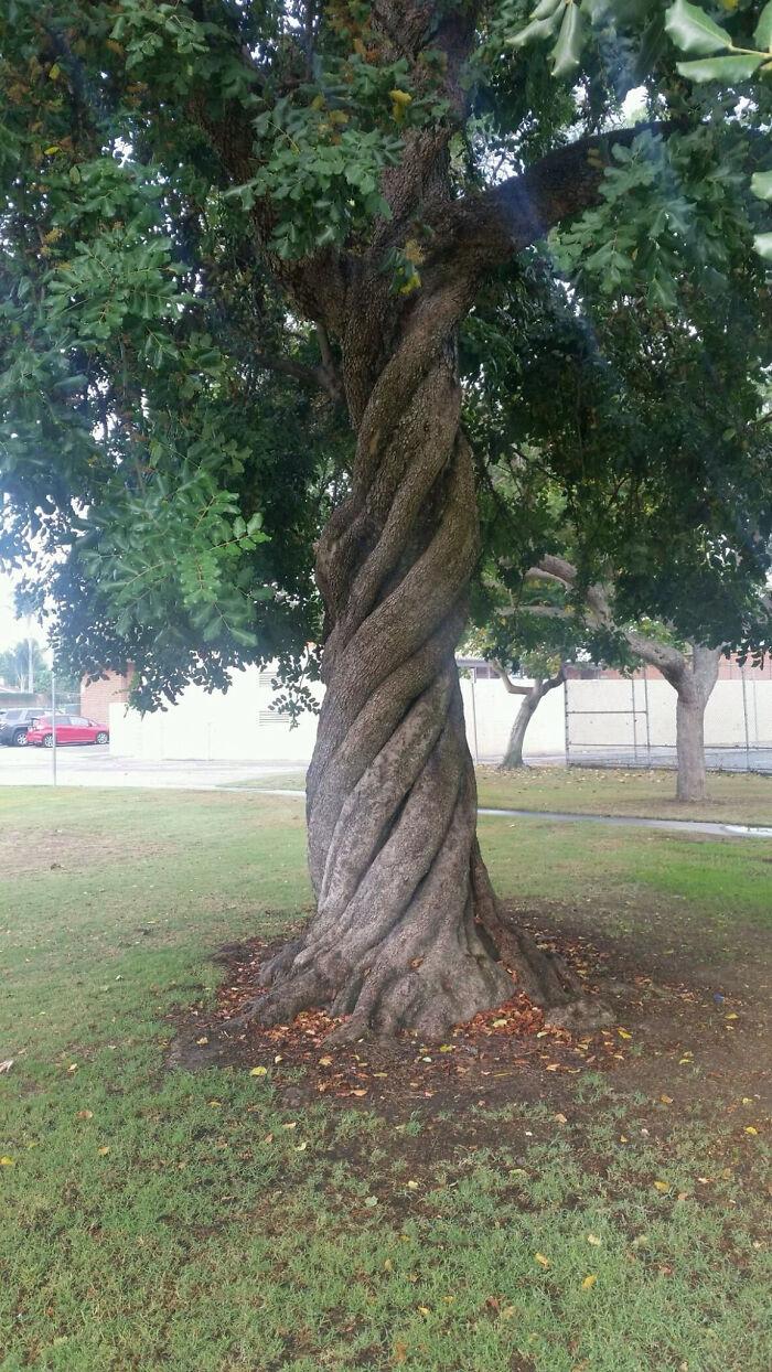 Árbol perfectamente retorcido