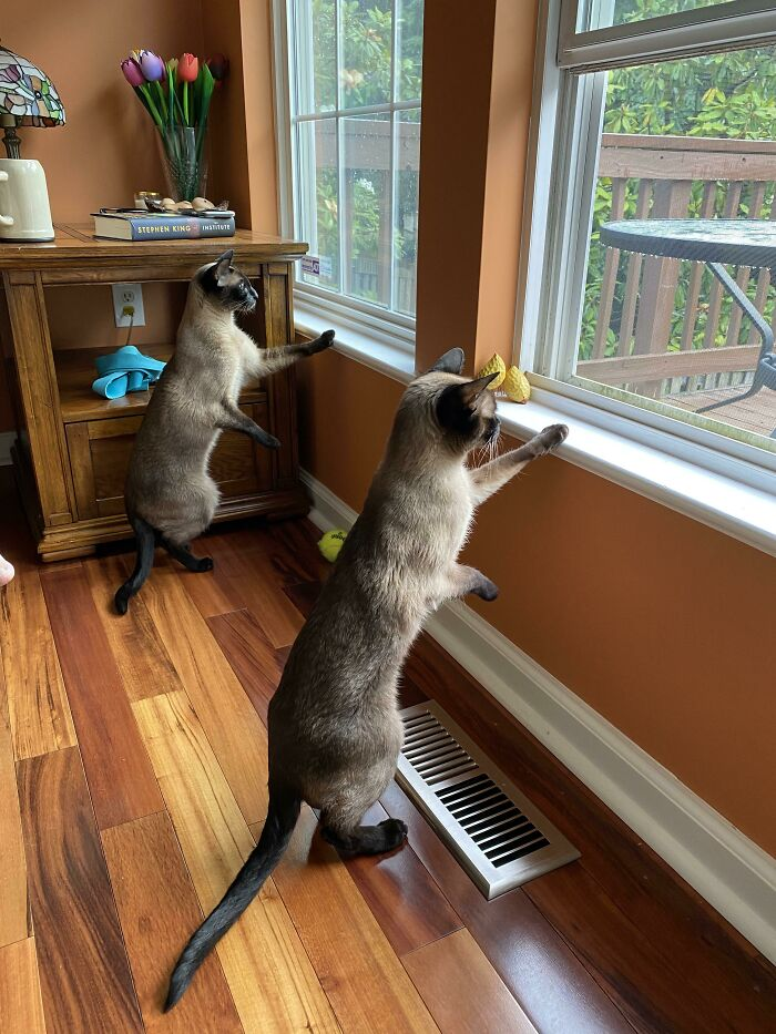 Squirrel Watching Position
