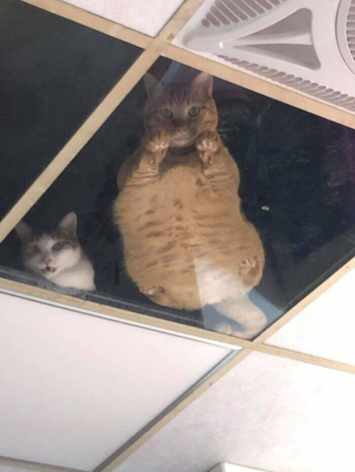 Shop Owner Installs Glass Ceiling For Cats So They Could Stare At Him While He Works