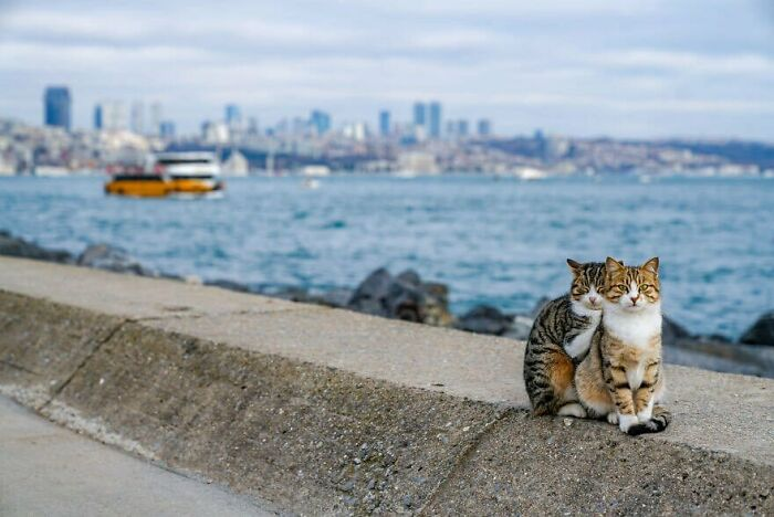 Two Cats Cuddling Each Other In A Coast Of Istanbul