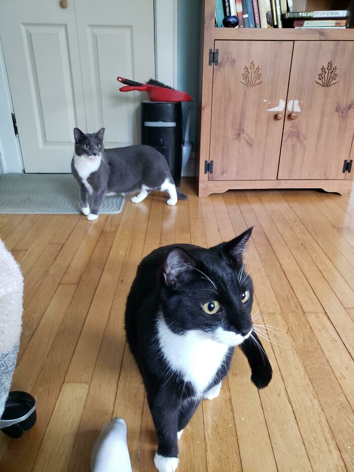 My Beloved Cat Died On Sunday And I Wanted Someone New To Take Care Of. My Vet Called And Told Me That This Brother And Sister Duo Needed An Emergency Home Asap. It Was Fate. World, Meet Fitz And Georgie!
