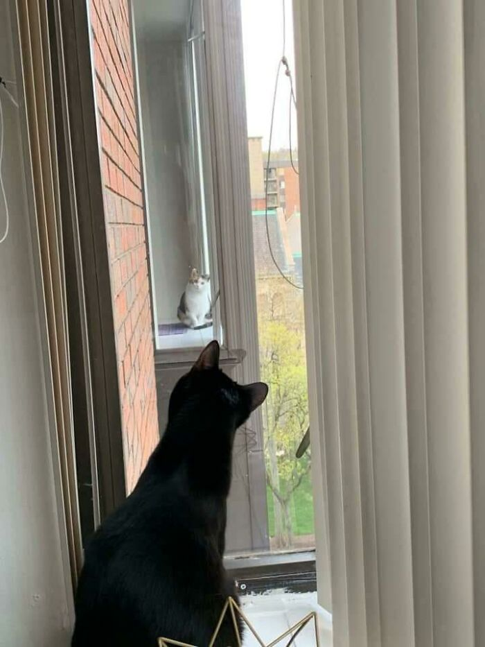 I Posted In A Thread About Silly Cats In My Apartment's Community Board That My Cat Won't Stop Looking Into My Neighbor's Apartment. She Replied With The Most Adorable Photo I've Ever Seen