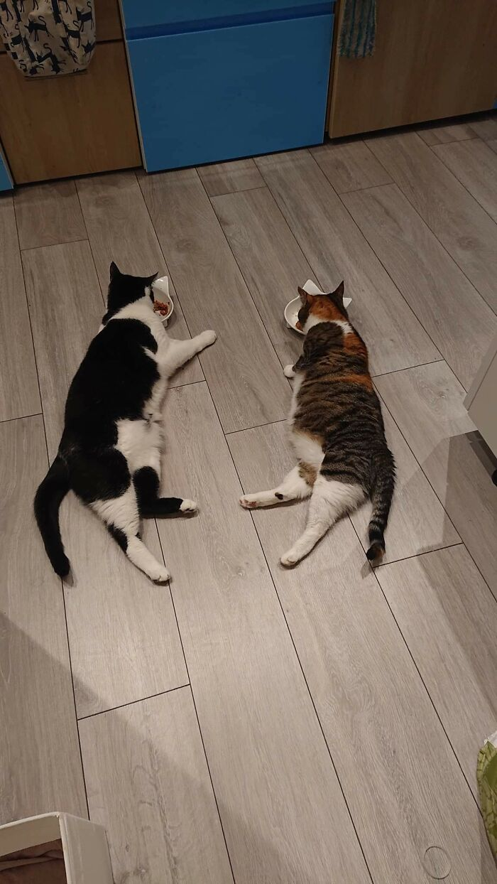 The New Cat Taught The Old Cat To Eat Like This...