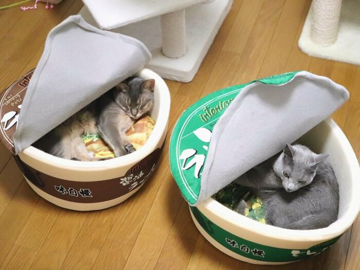 These Cats Love Their Ramen Beds