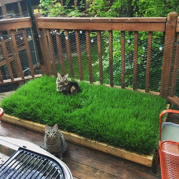Planted A Tiny Wheatgrass Yard On My Balcony For My Boys