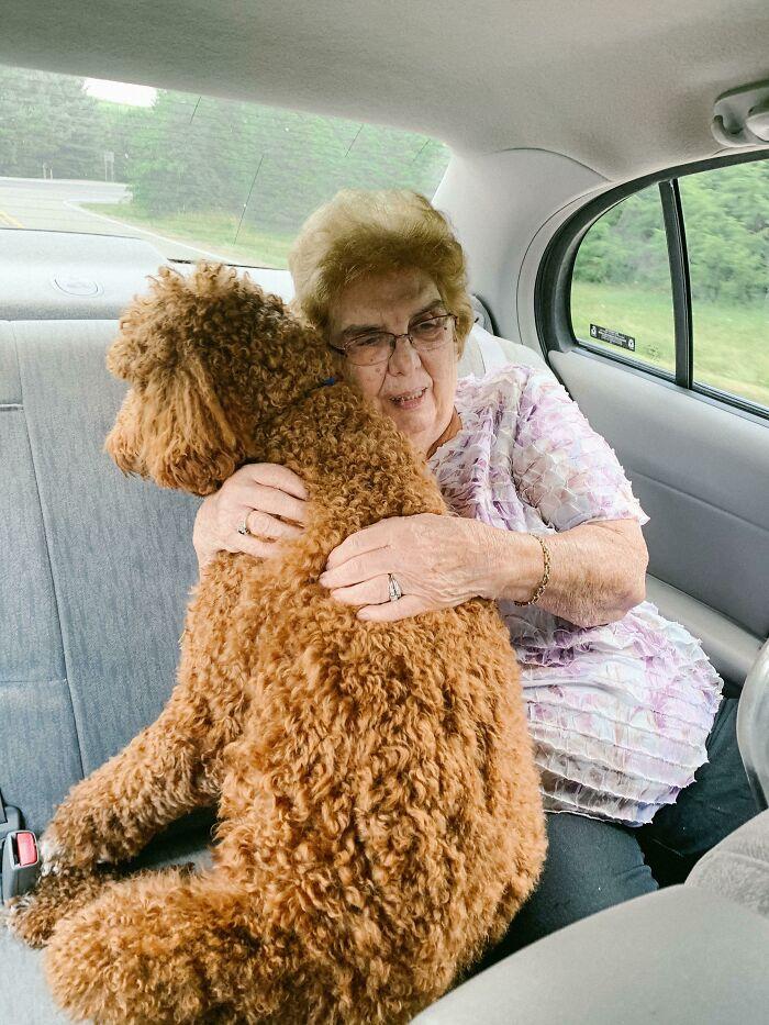 """Mi perro se pone muy ansioso en el coche, así que mi abuela le pidió sentarse atrás con él. Durante todo el viaje en coche lo único que escuché fue """"Está bien, ya casi llegamos, chico valiente"""""""