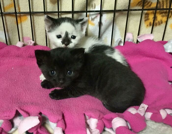 From The Group Of 130 Rescued Hoard Cats. Oreo And Coal. Oreo Is A Little Bit Shy But His Brother Is A Pretty Confident Kitty. All They Had Were Some Fleas