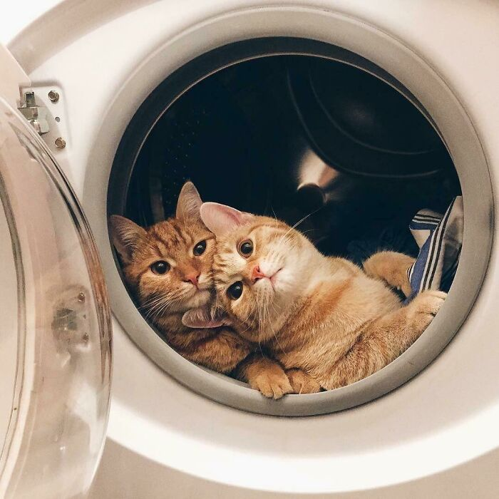 This Is What Cat Engagement Photos Would Look Like