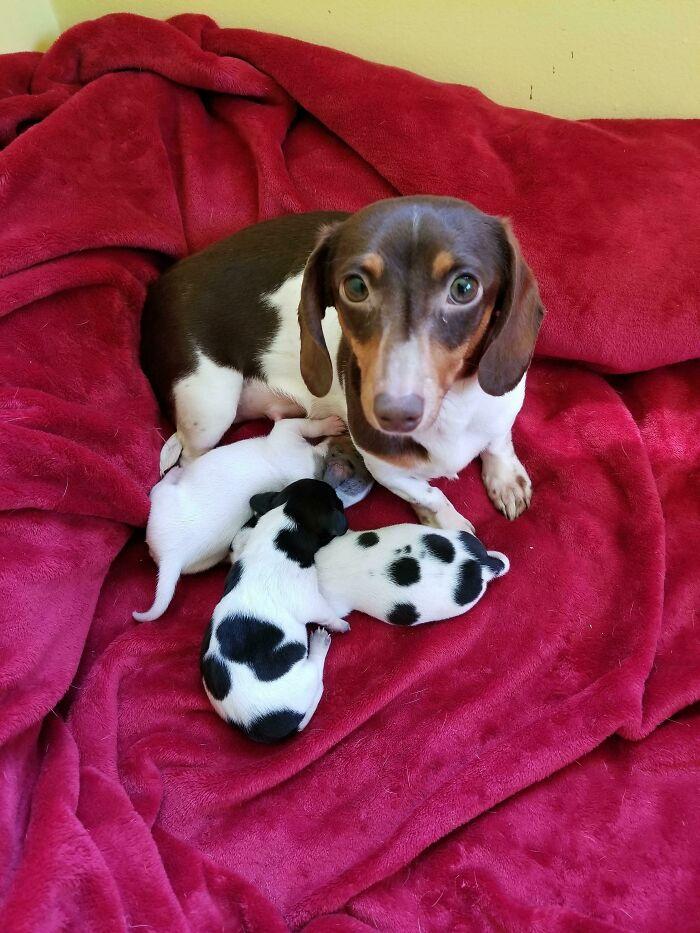 Mamá orgullosa con sus nuevos bebés