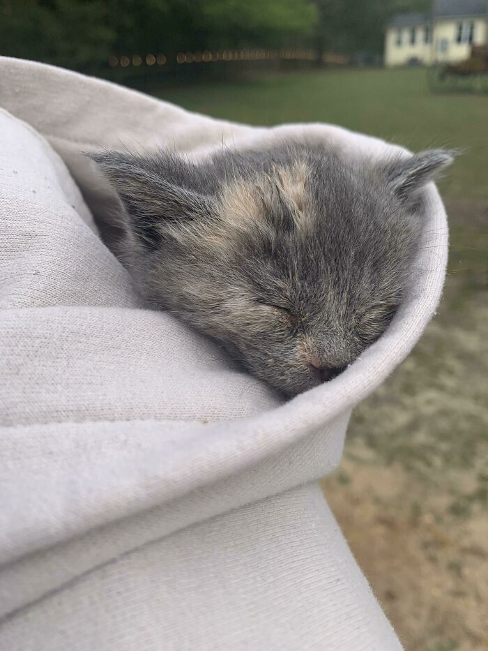Went To Look At New Born Cats And This Guy Crawled Into My Hoodie Filled Out The Adoption Papers Not Just A Minute Later With The Fluff Ball Still In My Hood