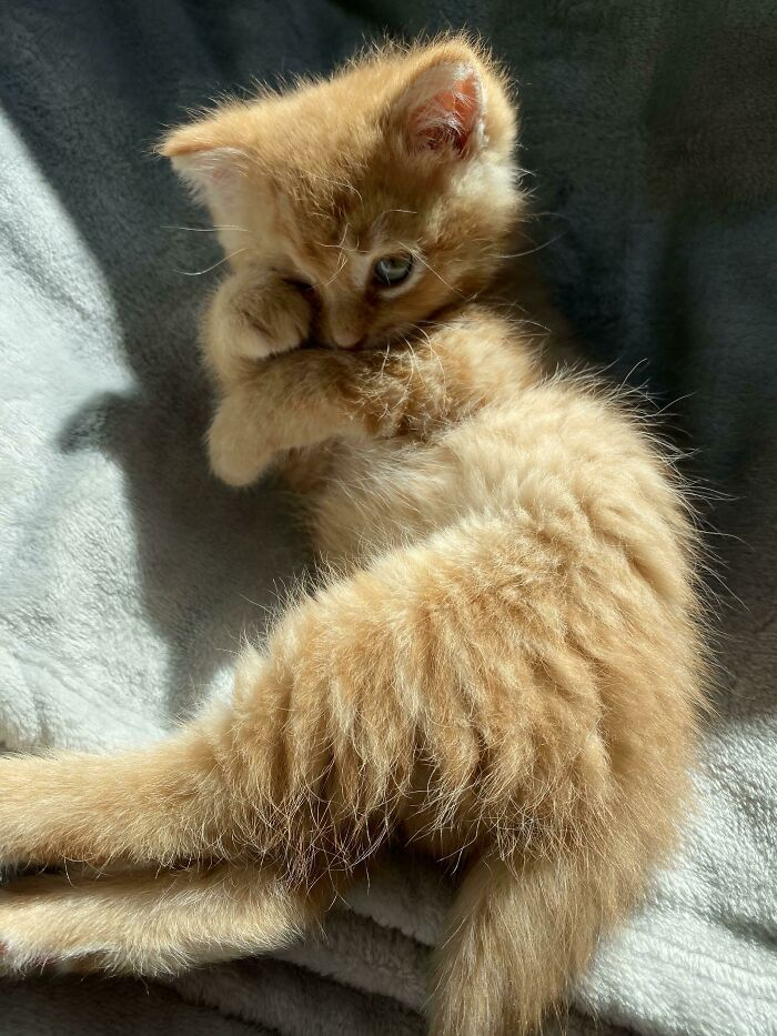 The Orange Kitten I Rescued From Under My Stairs Two Days Ago Already Knows How To Pose Like A Supermodel