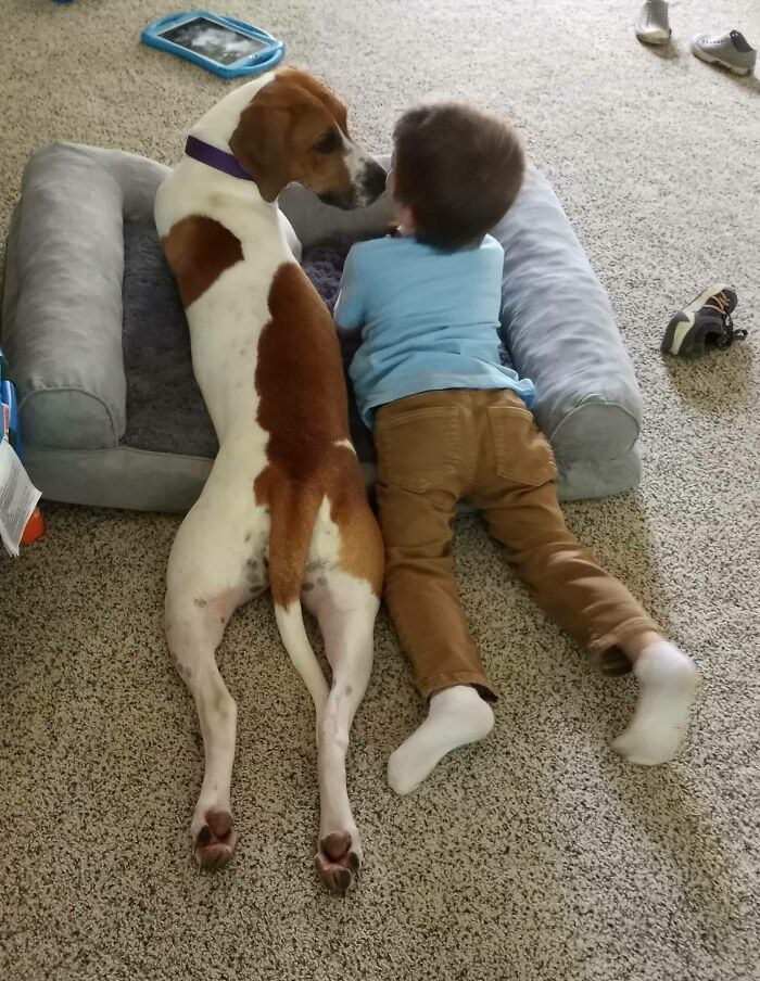 We Had No Plans To Adopt Our Current Foster Dog But Then This Happened