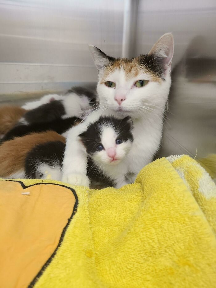 Started Volunteering At The Animal Shelter 2 Weeks Ago. Brought Home My First Foster Family Today. Momma And 6 3 Week Old Babies