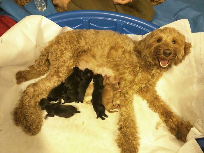 Nuestra perra acaba de tener nueve bebés y está extasiada