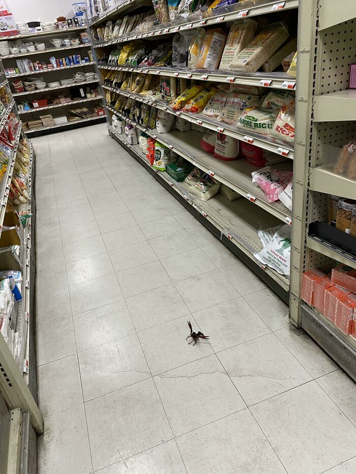 There Is A Live Crayfish Defending The Rice Aisle In My Local Asian Market