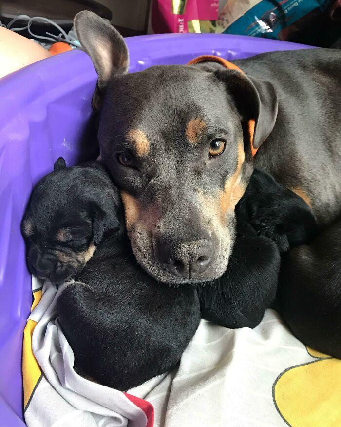 Una madre y sus pequeños y adorables bebés. ¿Pueden creer que la iban a sacrificar?